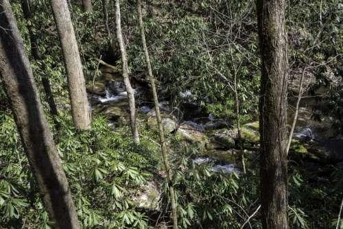 Stream through the woods in Chattahoochee-Oconee national forest, Georgia free photo