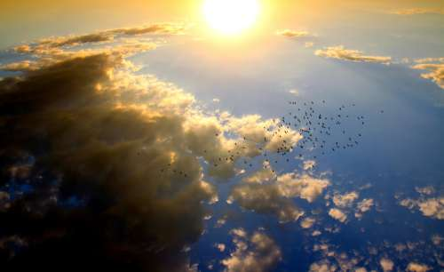 Sun and sky with birds and clouds free photo