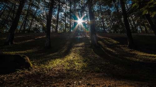 Sunlight Shining through the trees free photo