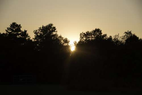 Sunset behind the Trees at J.W. Wells State Park, Michigan free photo