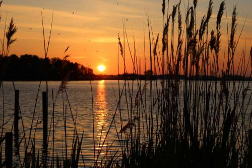 Sunset landscape beyond the reeds free photo