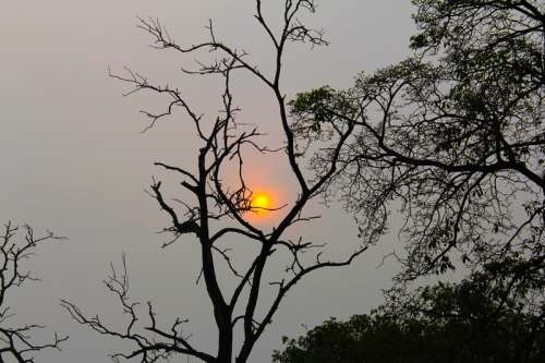 Sunset over the trees in Malaysia free photo