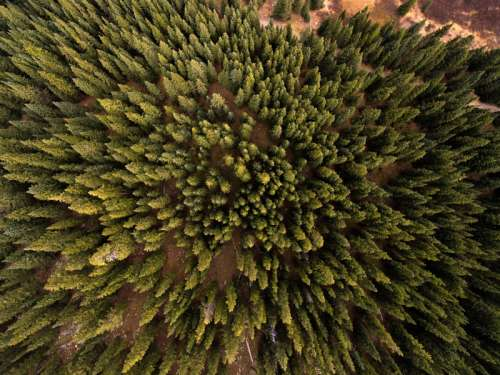 Top Down look at the pine forest in Frisco, Colorado free photo