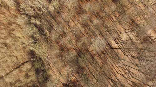 Top Down View of the forest in Torrild, Denmark free photo