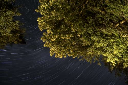 Tree and star-trails at Algonquin Provincial Park, Ontario free photo