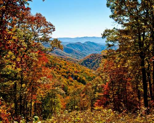 Trees and landscape in Autumn in Great Smoky Mountains National Park, Tennessee free photo