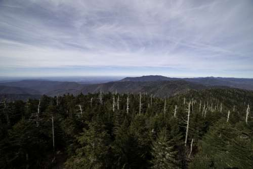 Trees and mountaintops landscape at Clingman's Dome, Tennessee free photo