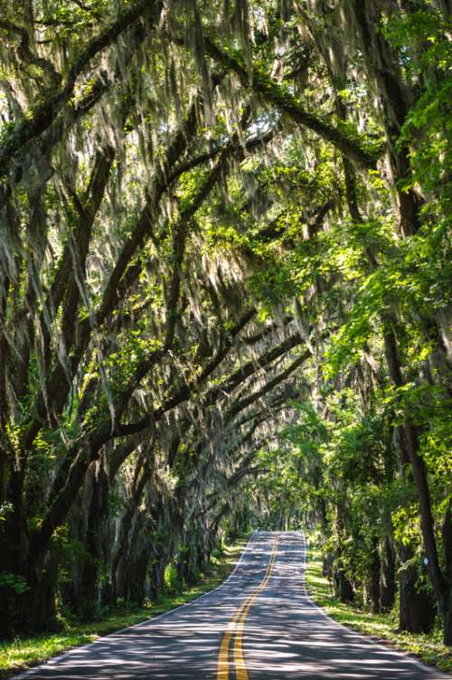 Trees arching over the road in Tallahassee, Florida free photo