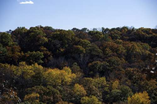 Trees in Morton County Forest, Wisconsin free photo