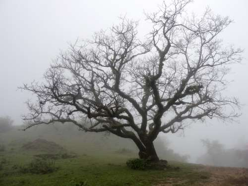 Trees in the landscape in the fog, India free photo