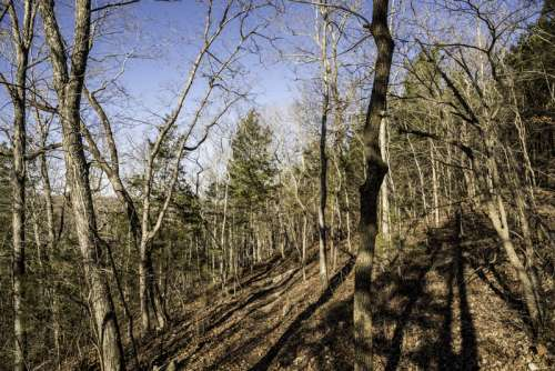 Trees in the winter in the Current River Trail in Echo Bluff State Park, Missouri free photo
