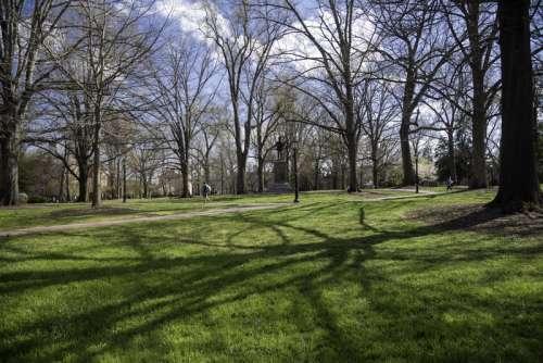 Trees on the main quad of UNC Chapel Hill, North Carolina free photo