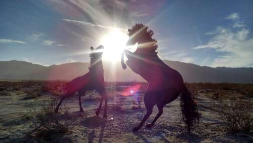 Two horses playing in the sunlight free photo