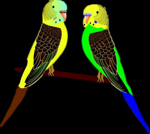 Two Parakeets Vector Clipart free photo