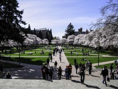 University of Washington Quad in spring in Seattle free photo