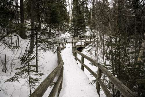 Walkway through the trees in the snow at Cascade River State Park, Minnesota free photo