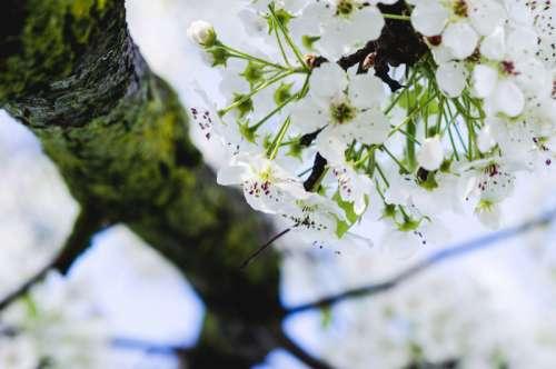 White Flowers on tree in Trenton, New Jersey free photo