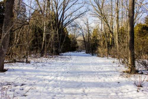 Landscape Photo of a snowy trail at Parfrey's Glen, Wisconsin free stock photo free photo