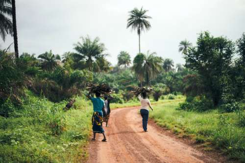 Women carrying wood on their heads in Sierra Leone free photo
