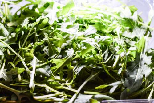 Fresh Rucola under light
