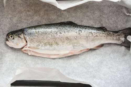 Fresh trout ready for baking