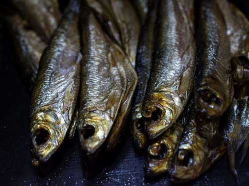 Smoked sprats fish