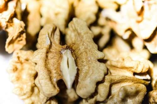 Walnut kernel close up