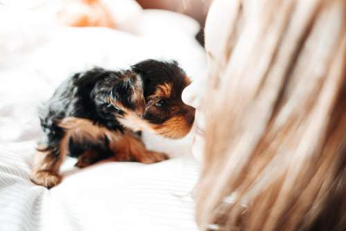 Adorable Puppy Licking Young Woman