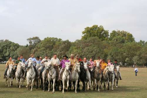 Abrivado Horses Camargue Nature Horse Bull