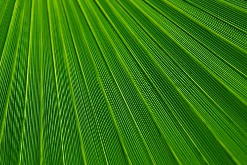Abstract Leaf Plant Background Backgrounds Botany