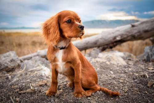 Adorable Animal Canine Close-Up Cute Dog Domestic