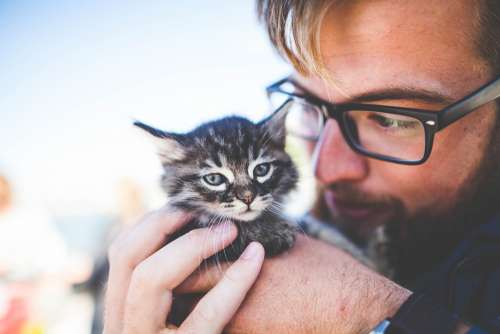 Adorable Animal Cat Cute Feline Kitten Man Pet
