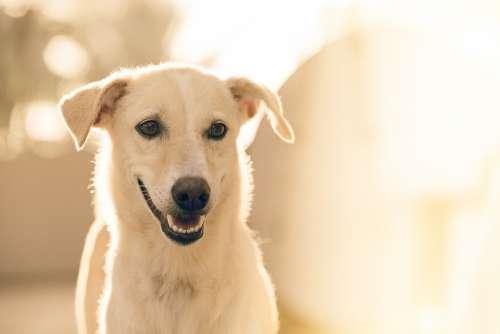 Adorable Dog Pet Animal Canine White