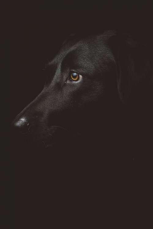 Adorable Dog Pet Animal Canine Close-Up Dark
