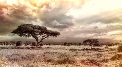 Africa Savannah National Park Tree Nature Sky