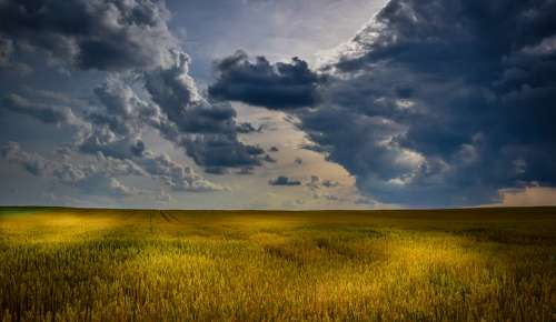 Agriculture Wheat Field Clouds Summer Cloudscape