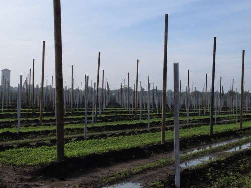 Agriculture Fruit Orchard Planting Fruit Tree