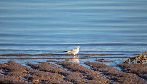Agua Bird Nature Animal Mar Wings Beach Birds