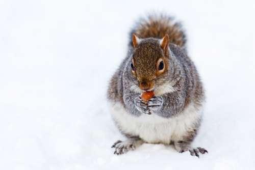 Animal Brown Cold Creature Cute Eat Fur Grey