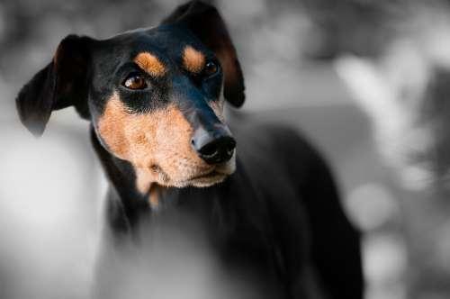 Animal Dog Pet Race Dog Snout Dog Look