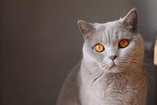 Animal Cat Close-Up Feline Pet Whiskers