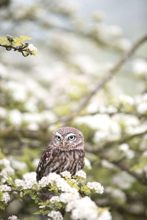Animal Owl Bird Flowers Macro Wildlife