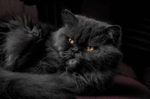 Animal Cat Cute Feline Furry Pet