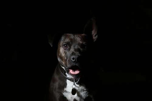 Animal Dog Black Canine Pet Gloomy Dark Portrait