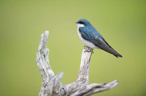 Animal Bird Avian Beak Close-Up Color Colorful
