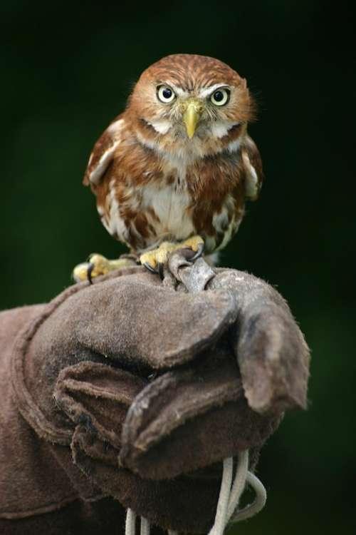 Animal Owl Beak Bird Bird Of Prey Feathers Gloves