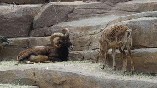 Animal Zoo Nature Wild Mammals Mammalia