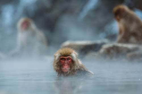 Animals Monkeys Macaque Nature Outdoors Primate