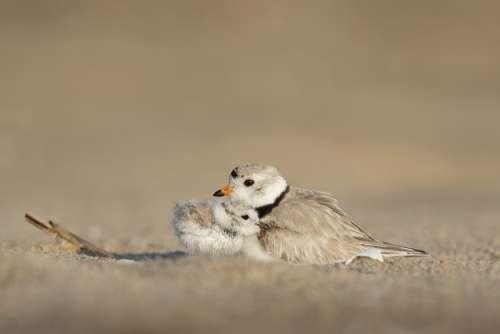Animals Avian Birds Depth Of Field Nature Outdoors