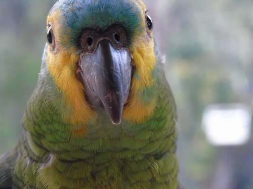 Animals Parrot Birds